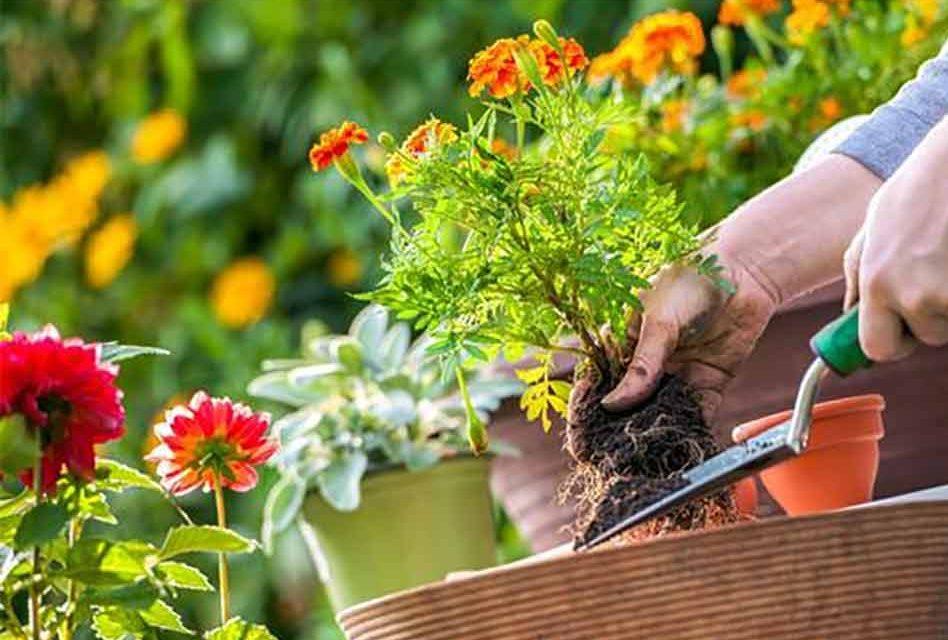 gardenening-948x640