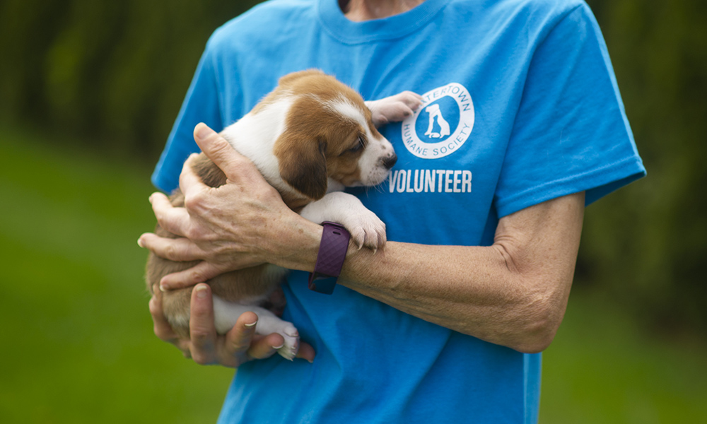 volunteerpictureed