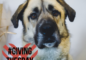 Giving-Tuesday-FB-Post-Grizzly-