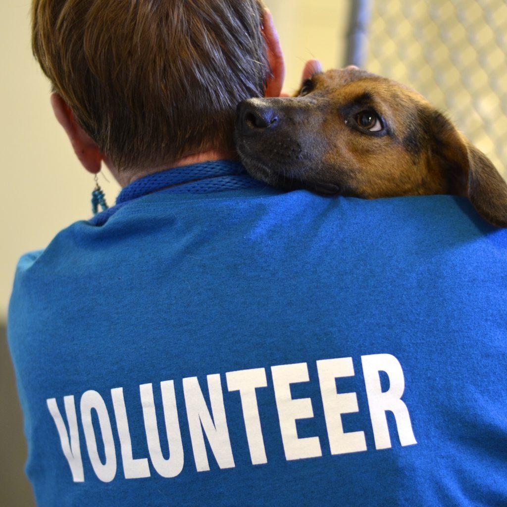 Volunteer-1024x1024